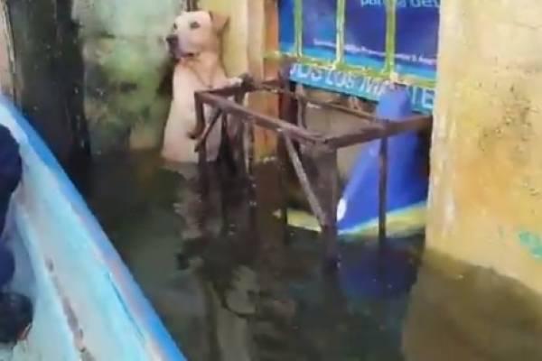 Rescatan a perrito que se encontraba atrapado en medio de inundaciones en México