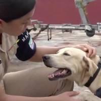 Marinos rescatan y adoptan a perrito abandonado durante las inundaciones de Tabasco
