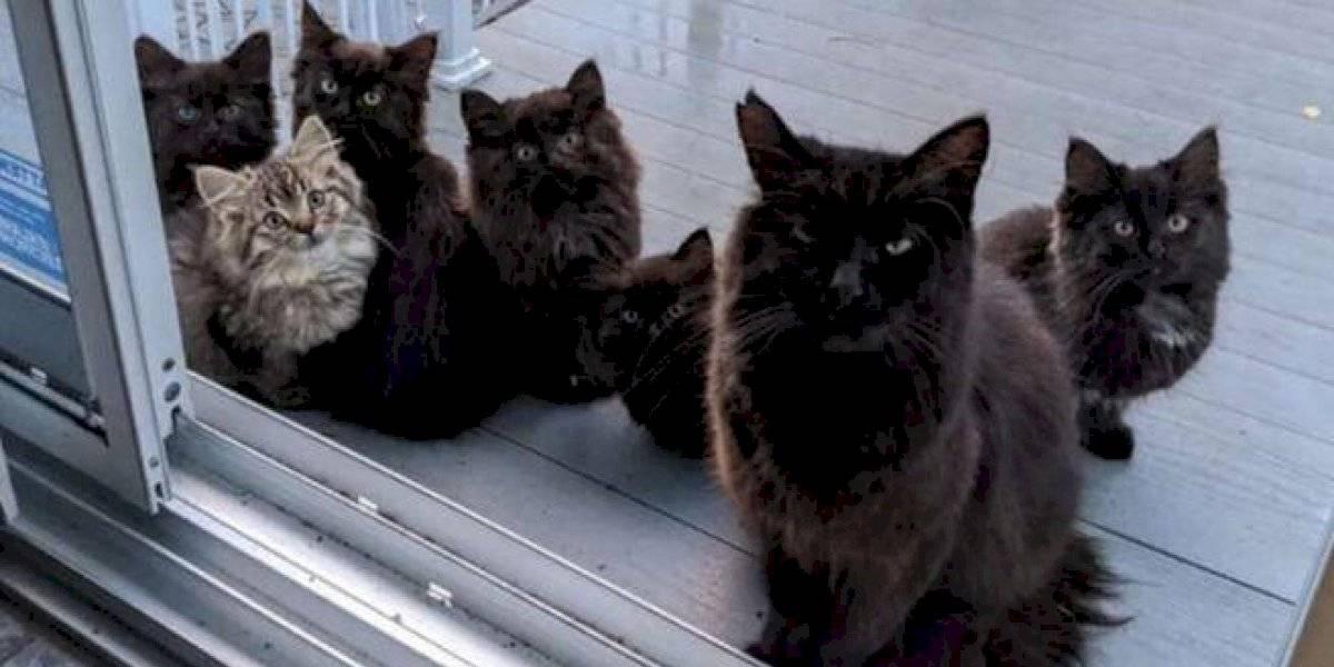 La tierna historia que se volvió viral: gata callejera presenta sus crías a la mujer que le da de comer todos los días
