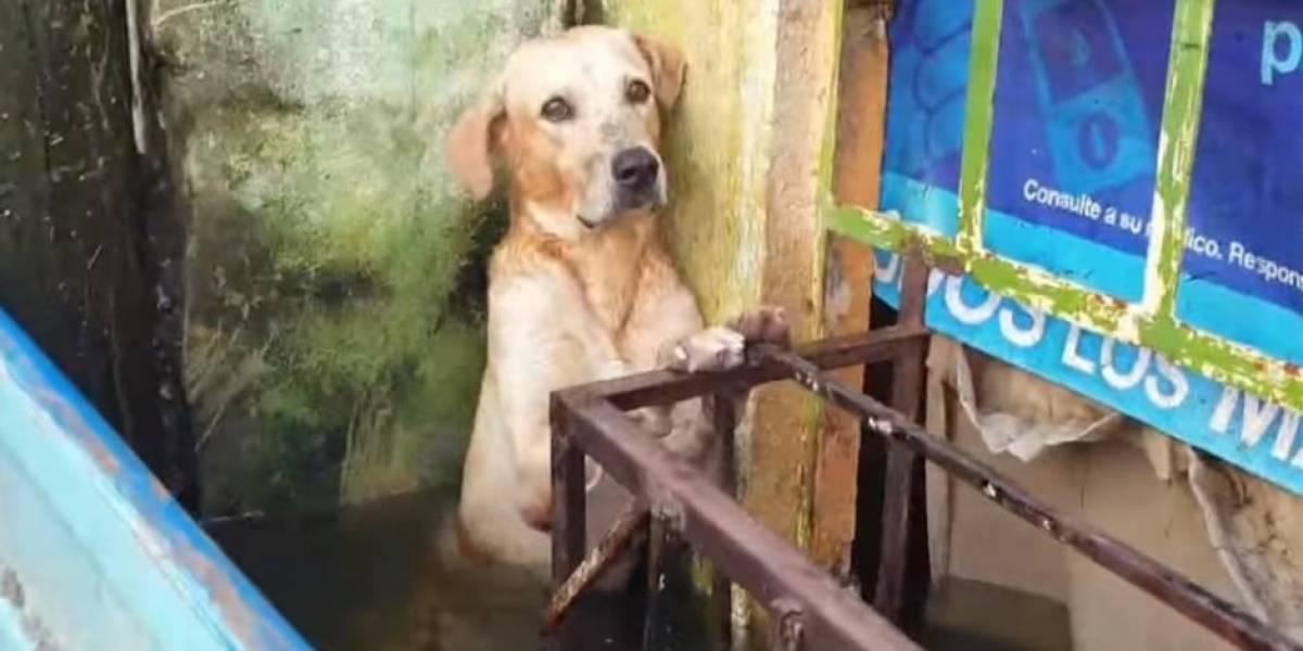 Un final feliz tuvo perrito que fue rescatado en medio de fuertes inundaciones