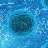 Investigadores descubren que el virus hallado en Bolivia, Chapare, puede transmitirse entre personas