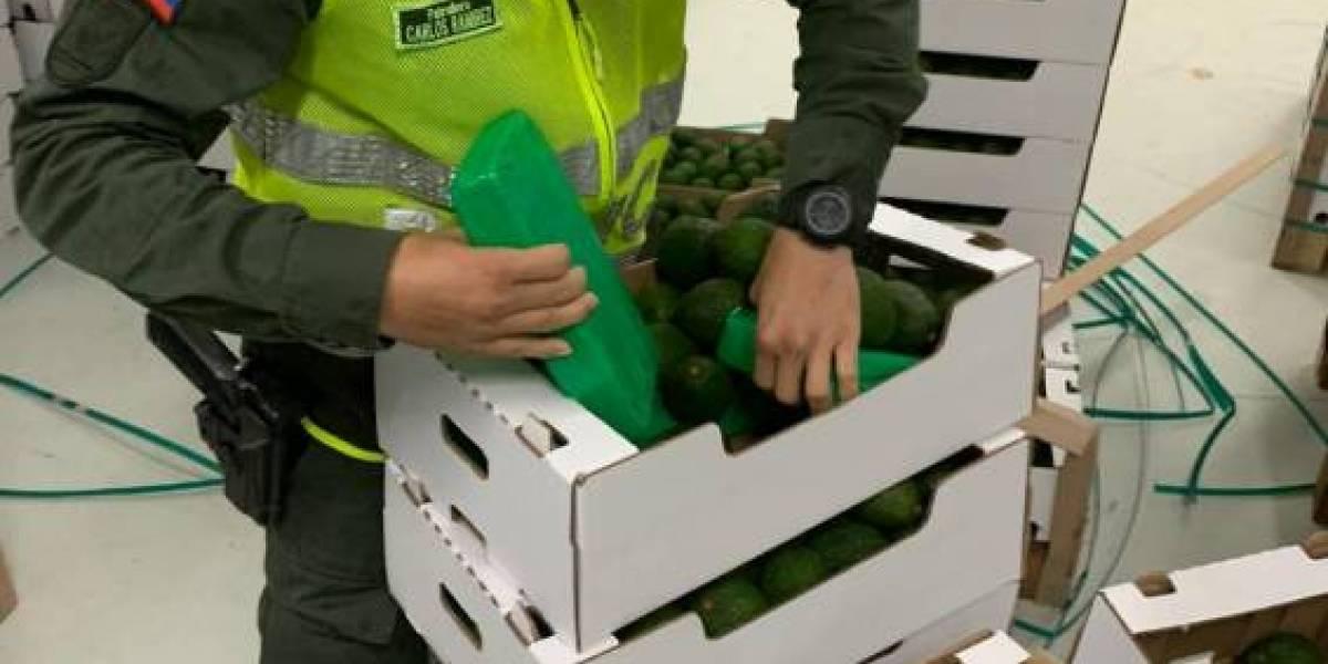 Descubren cargamento de cocaína camuflado en aguacates que iban para Bélgica