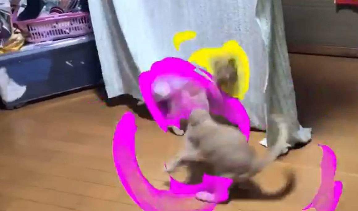 Gatos Super Saiyajin