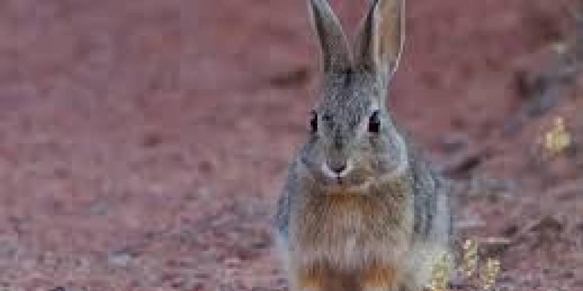 (VIDEO) Madre recibe un gran susto al ver que su hija confunde a un conejo con una rata