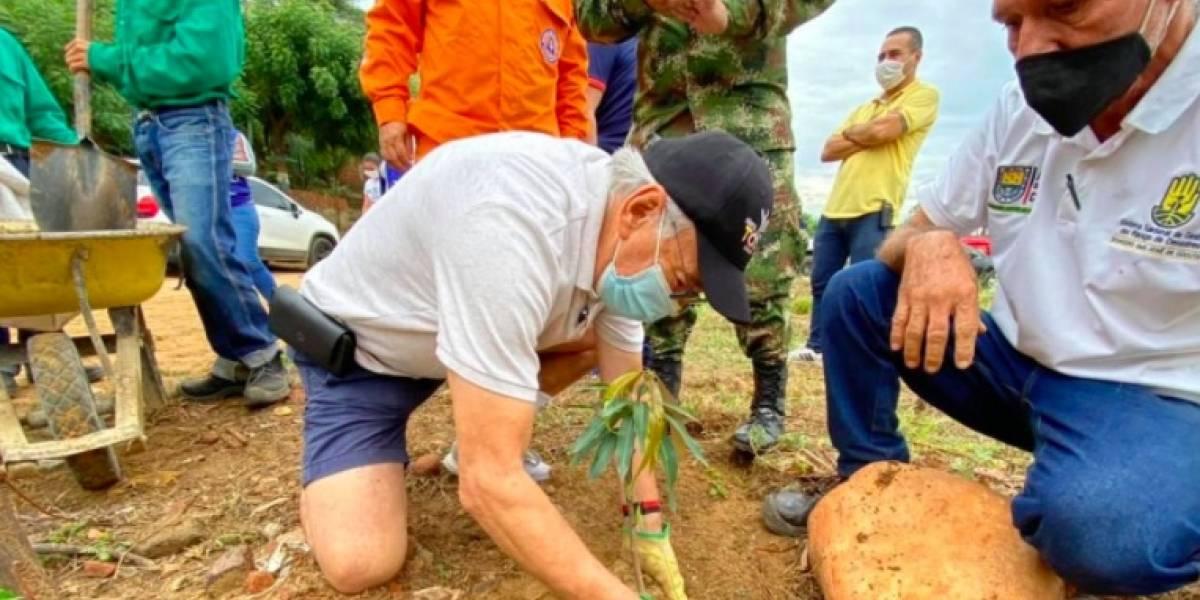 ¡Cúcuta, ciudad verde! 110 mil árboles fortalecerán el 'pulmón' del área urbana