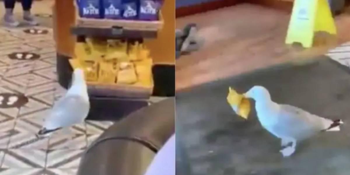 Vídeo viral registra pássaro 'roubando' saco de salgadinho em loja