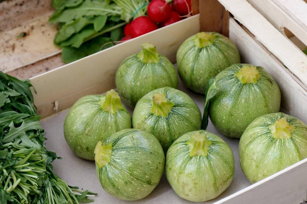 El calabacín es un vegetal alto en fibra, cargado de agua y vitaminas.
