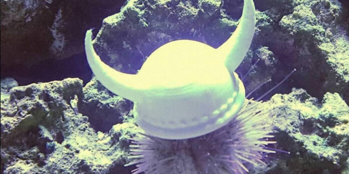 Sombreros elegantes son la última tendencia en los mares