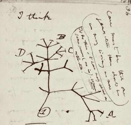 El Árbol de la vida, dibujo de Charles Darwin.