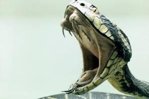 https://www.metrojornal.com.br/social/2020/11/25/video-mostra-captura-de-tres-cobras-cuspideiras-de-mocambique.html
