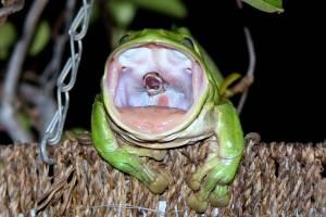https://www.metrojornal.com.br/social/2020/11/26/video-mostra-perereca-tentando-comer-cobra-com-o-dobro-do-seu-tamanho.html