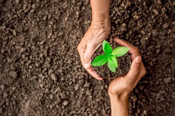 Fondo de Protección Ambiental: cómo y dónde postular