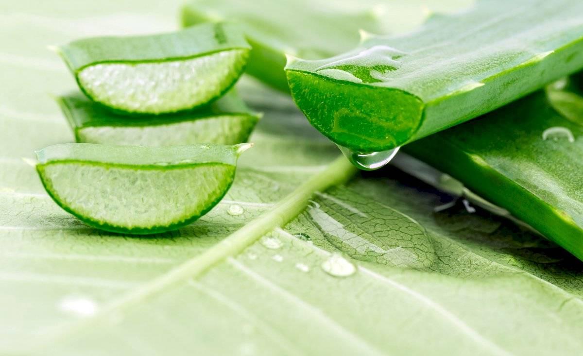 El aloe vera ayuda a eliminar la grasa de los folículos pilosos.