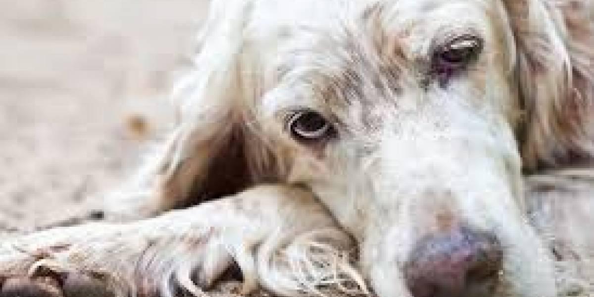 Claves para ayudar a los perros cuando envejecen