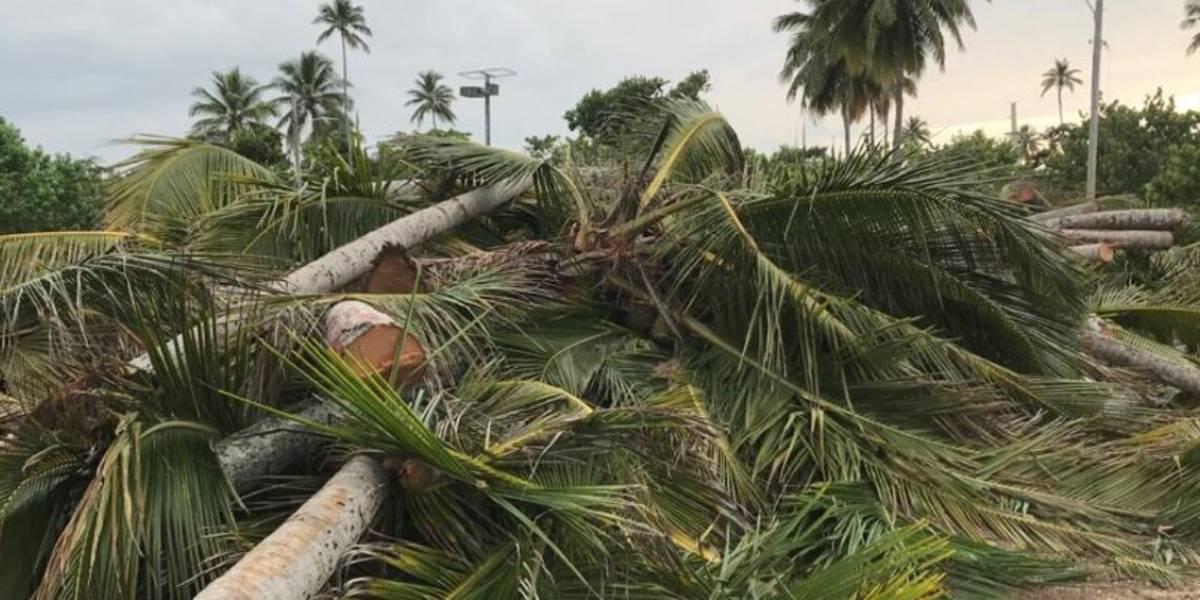 Sigue el caso judicial por la tala de más de 1,000 árboles y palmas en Vega Alta