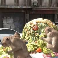 Monos hambrientos disfrutan de un banquete en Tailandia