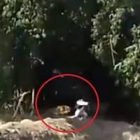Vídeo registra momento de desespero em que tigre invade vila na Índia e ataca moradores