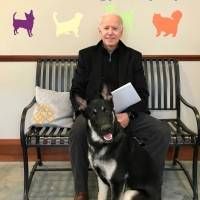 Amigos peludos: Las dos mascotas de Joe Biden que lo acompañarán en la Casa Blanca