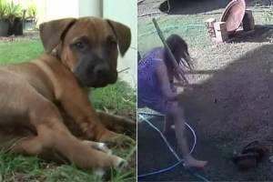 Vídeo mostra momento em que filhote de cachorro é salvo de píton que o atacou no quintal de casa