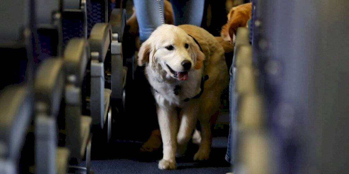 Sólo perros entrenados podrán acompañar a dueños en aviones