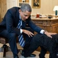 Eternos compañeros: Perros, gatos y todas las mascotas que han pisado la Casa Blanca