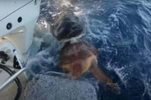 https://www.metrojornal.com.br/social/2020/12/03/video-impactante-registra-momento-em-que-tubarao-ataca-tartaruga-em-alto-mar.html