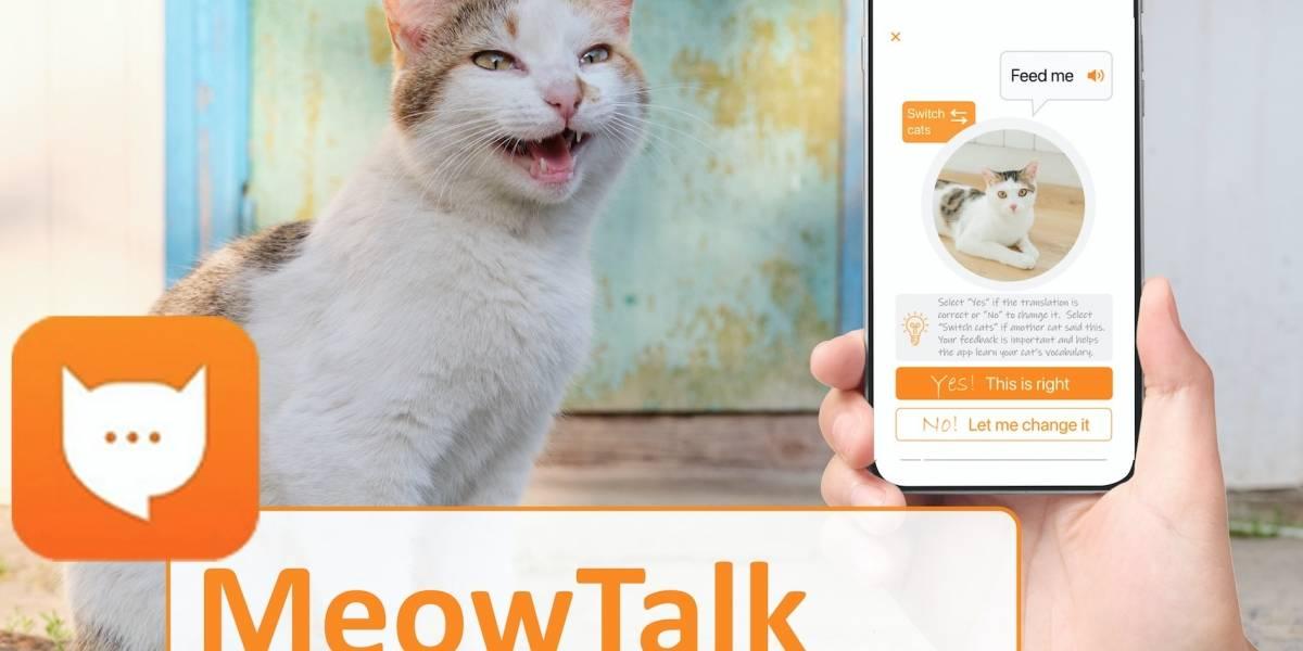 MeowTalk promete traducir los maullidos de tu gato