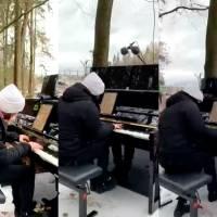 Pianista toca en el bosque en protesta contra construcción de autopista