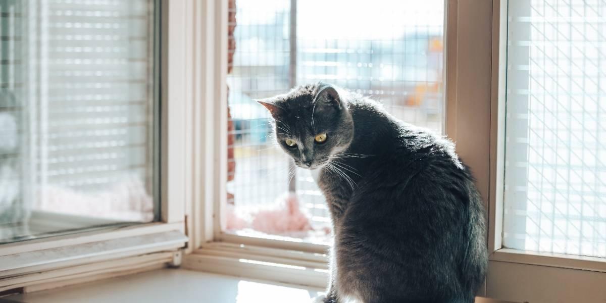 Aumentan casos de animales caídos desde balcones de edificios