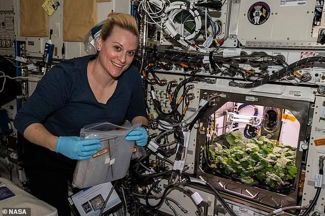 La astronauta Kate Rubins, de la Estación Espacial Internacional, con el cultivo de rábanos.