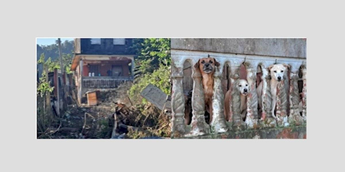 Remueven 20 perros de una casa en Bayamón