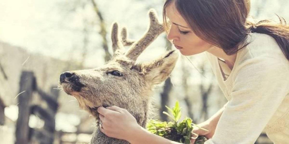 Cuatro carreras que puedes estudiar si te gustan los animales