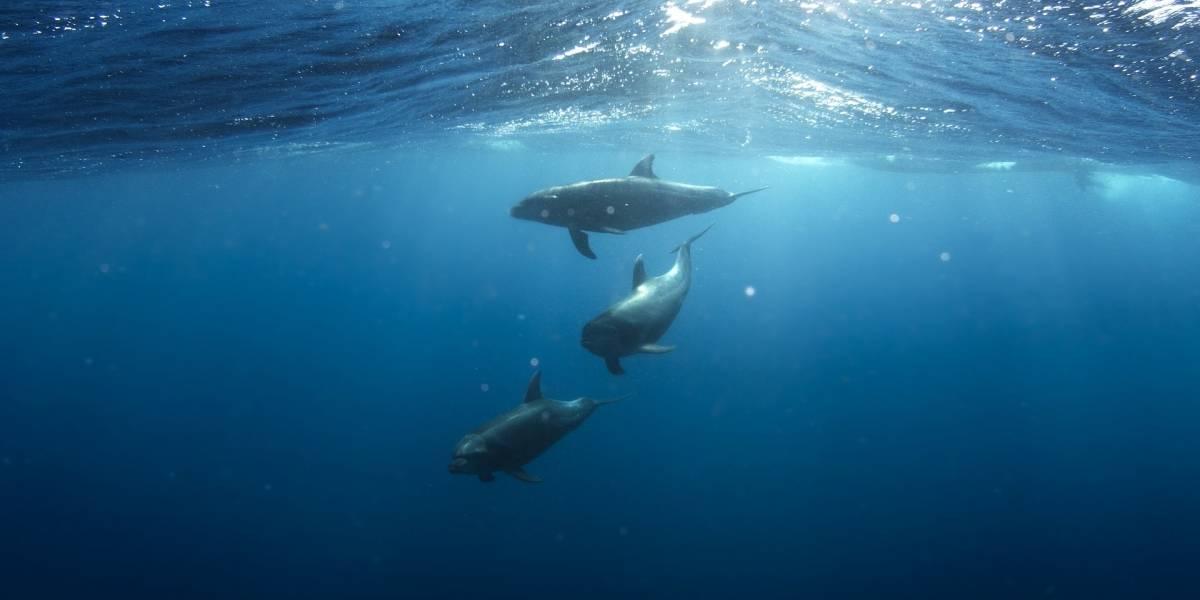 Todas las especies de delfines de agua dulce están en peligro de extinción