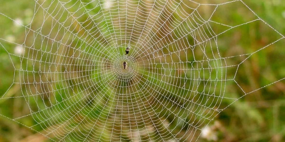 Arañas en la Estación Espacial Internacional necesitan de la luz como guía de orientación para tejer sus redes
