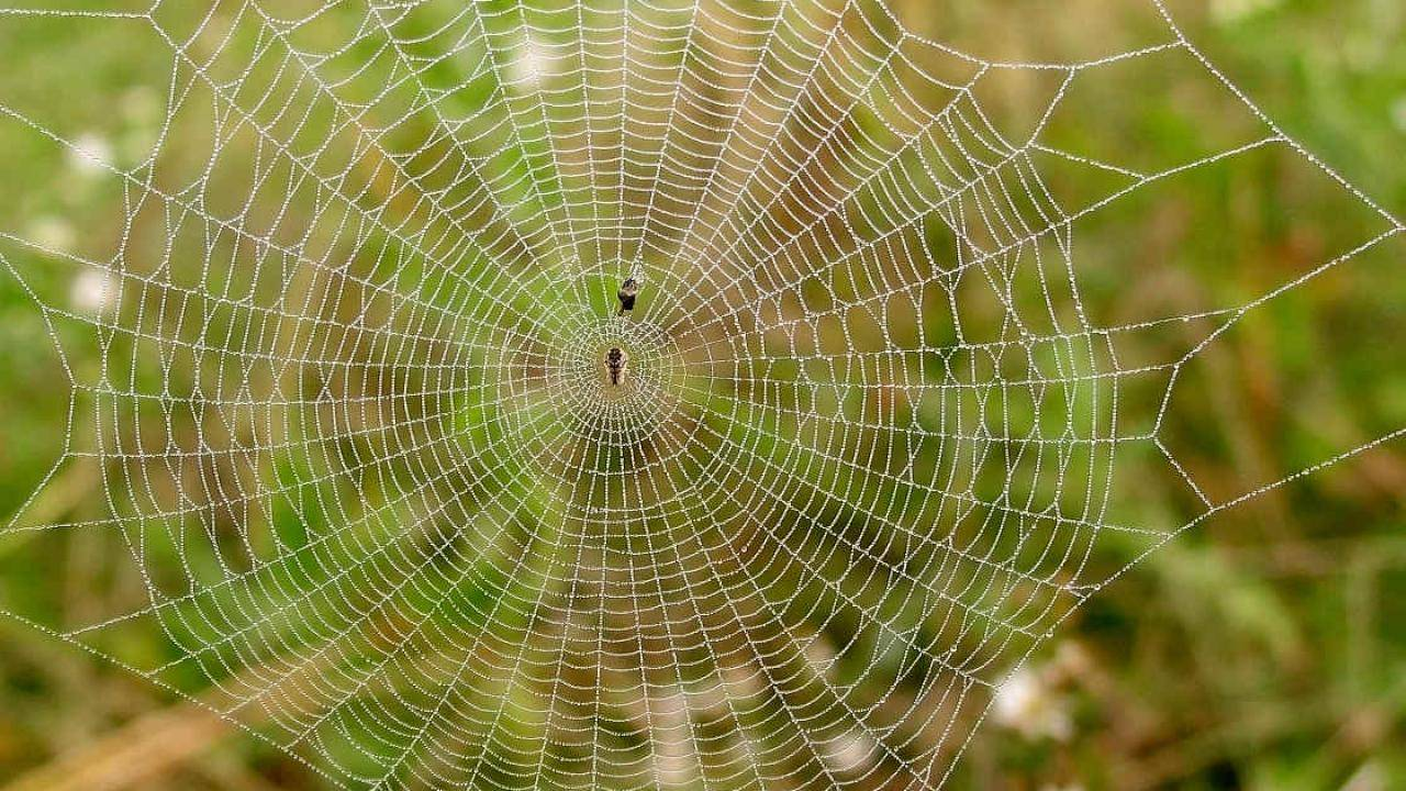 Araña y telaraña