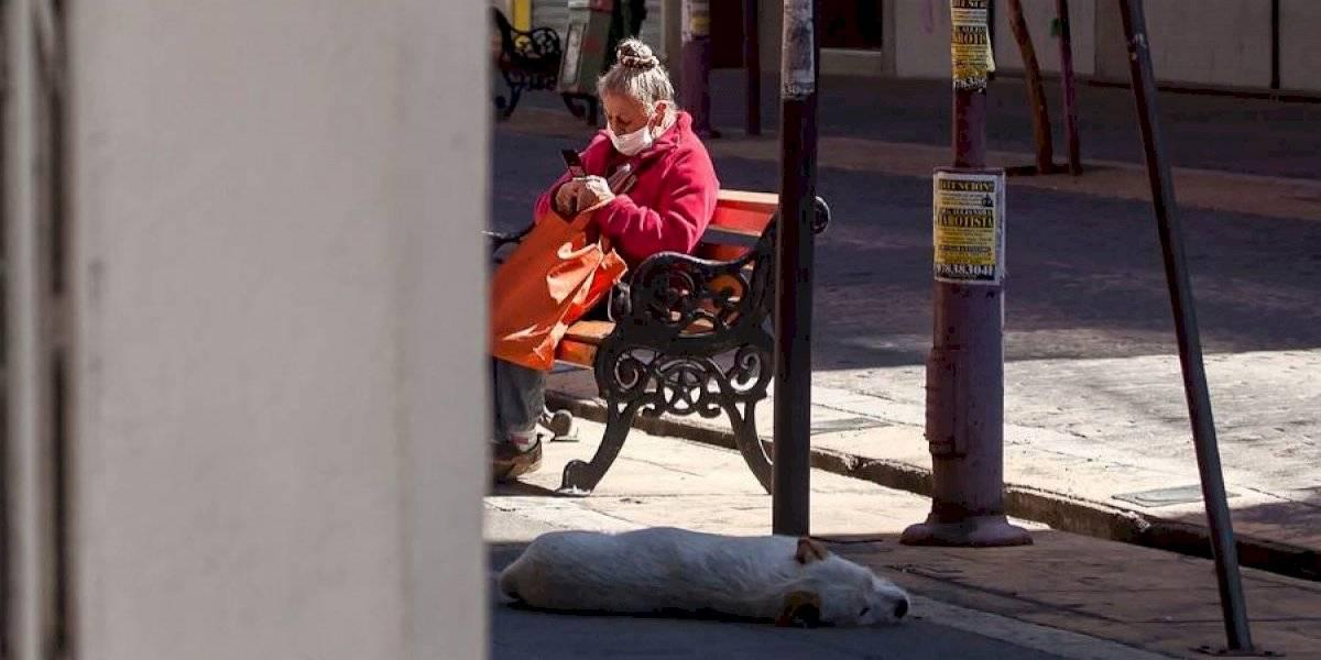 Anciana vive en total abandono sin luz, sin agua, con 16 perros y al lado del vertedero