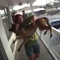 ¡Acto inhumano! Mujer lanzó a su perro desde una terraza; ya fue arrestada por crueldad animal