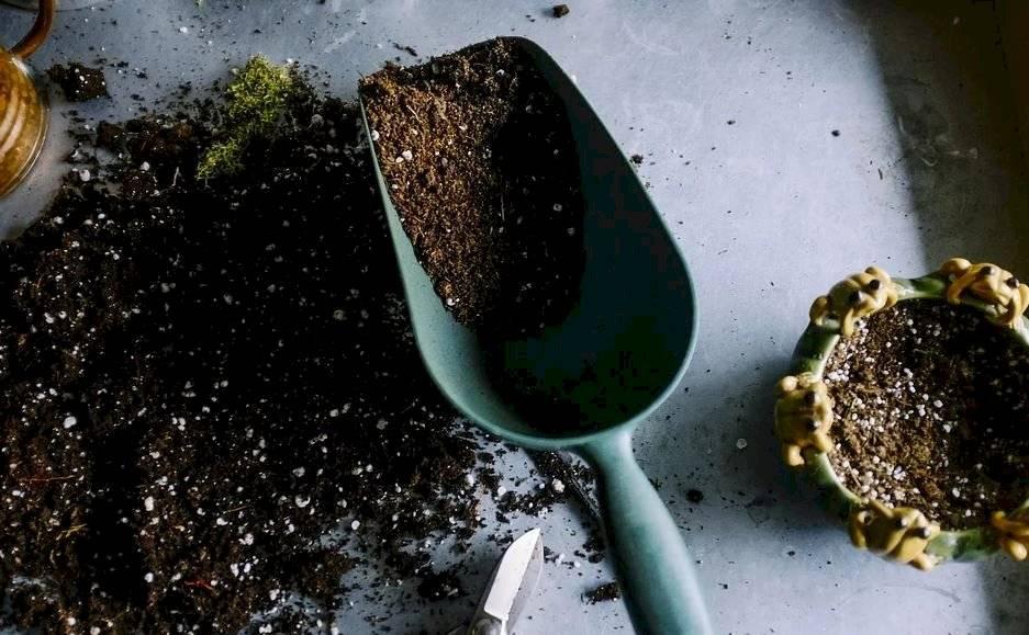 Trasplantar una planta no debe hacerse en temporada de mucho frío por el riesgo de mayor debilitamiento de la planta, en especial, de sus raíces.