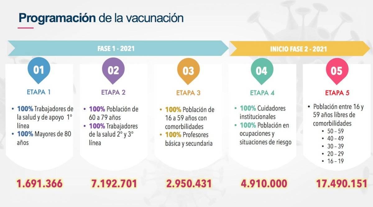 fases de la vacuna