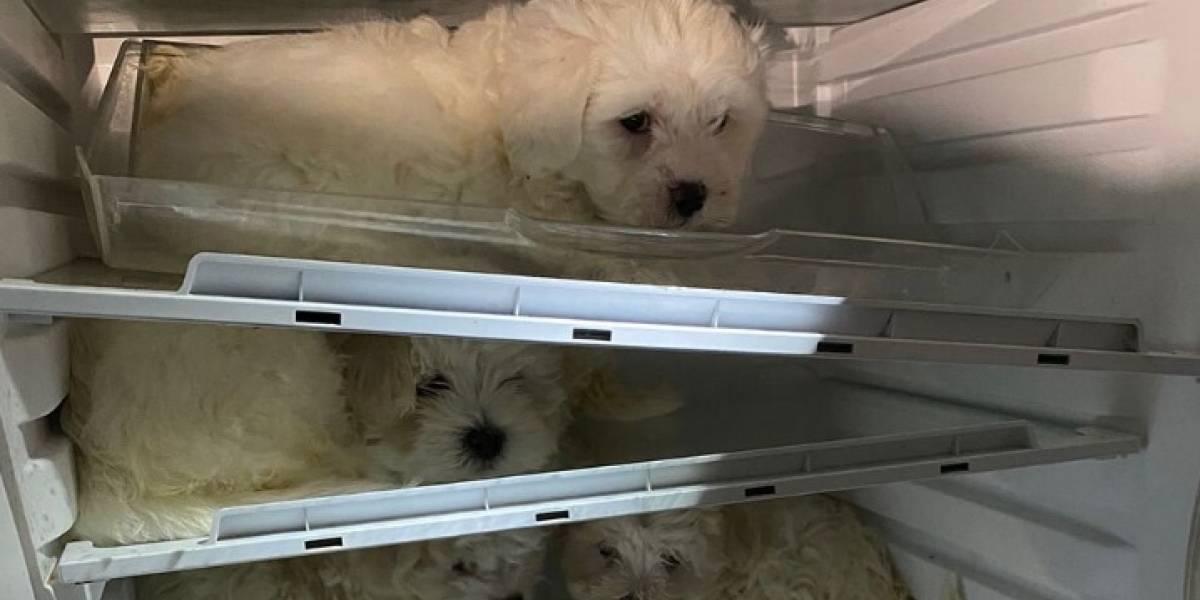 Rescatan a perros que tenían guardados en un refrigerador para venderlos en Navidad