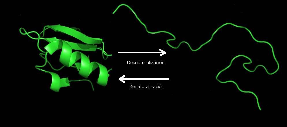 Desnaturalizacion proteínas