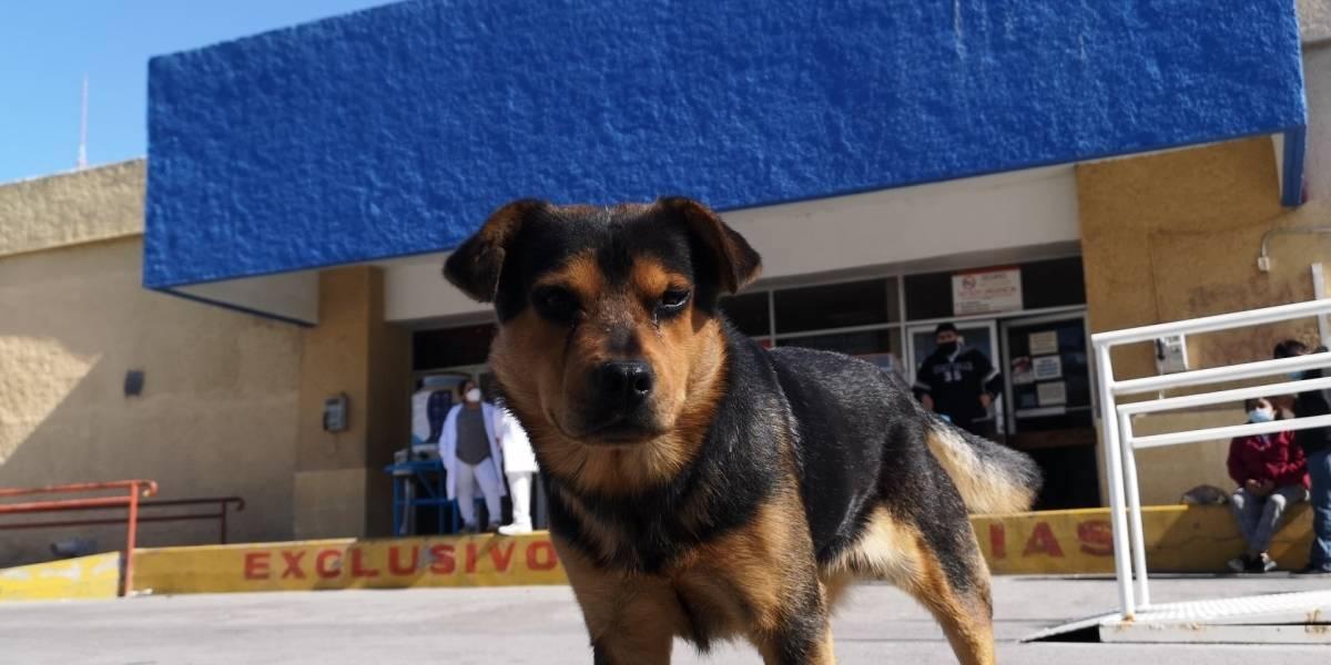 Perro sigue esperando a su dueño que murió de COVID-19