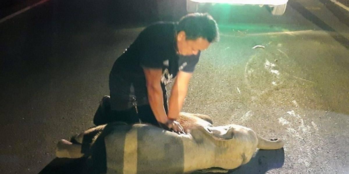 VIDEO: Así revivió un hombre a un elefante bebé en Tailandia