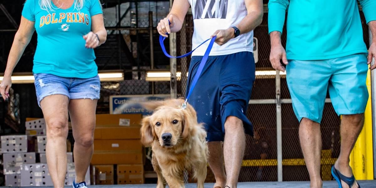 Salvan a 20 perros golden retriever de una carnicería en China; fueron trasladados a Estados Unidos