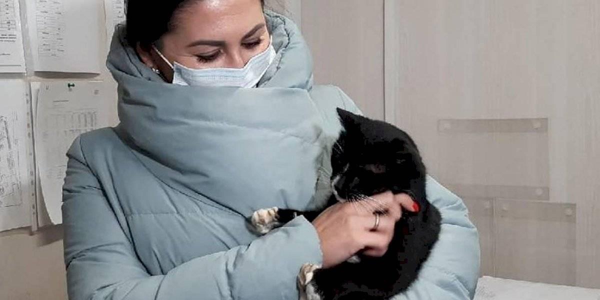 Gato que fue rescatado de ser triturado se convierte en viceministro en Rusia