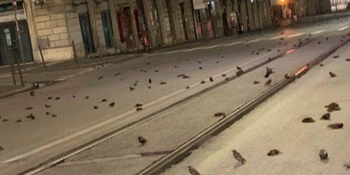 Cientos de aves murieron por fuegos artificiales de Año Nuevo en Roma