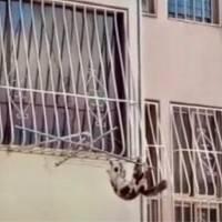 Hombre lanzó a gato por la ventana desde un piso 20