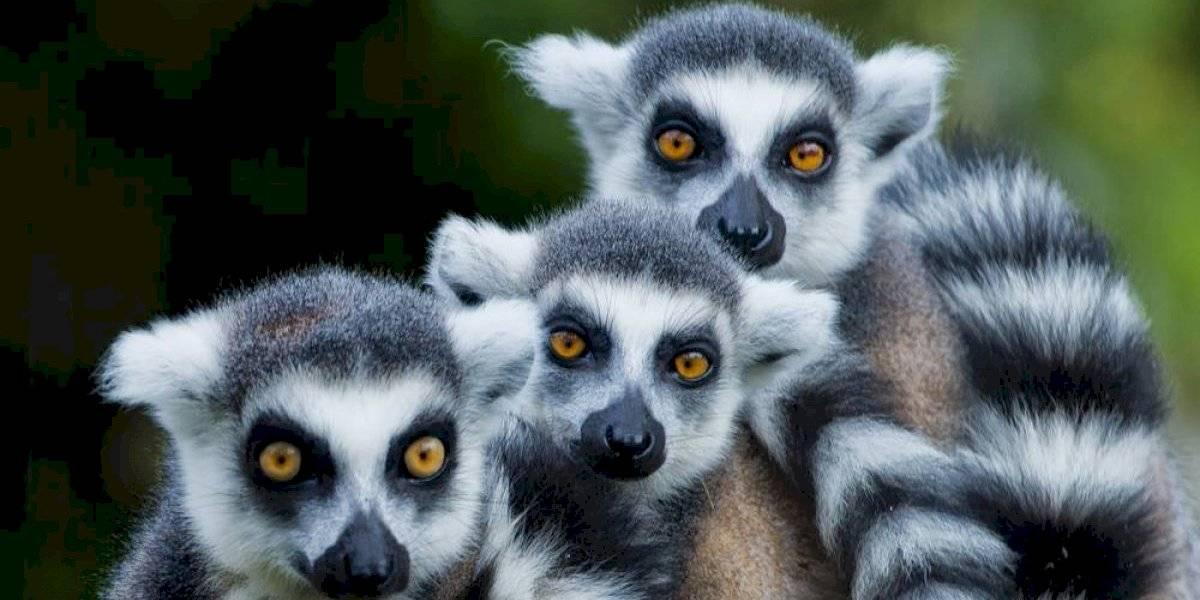 Animales en peligro de extinción: cinco especies que podrían desaparecer en 2021