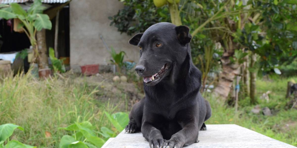 La triste historia de Mino, la perra que no abandona la tumba de un niño de dos años ahogado en Vietnam