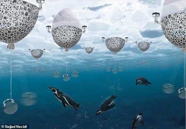 Proyecto para la protección del pingüino emperador.